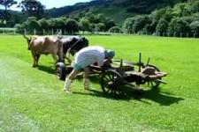 Merkels Fachkräfte beim Rasenmähen....