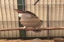Ziemlich lauter Vogel