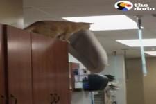 Katze macht einen verrückten Sprung