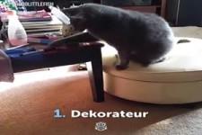Vorteile einer Katze