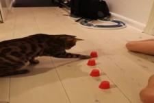 Sehr kluge Katze