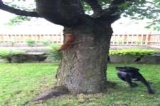 Wo ist denn das Eichhörnchen