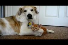 Kaetzchen versucht Hundezunge zu schnappen