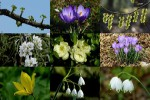Lentetijd---Frühlingszeit.ppsx auf www.funpot.net