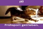 Der-Tagesablauf-von-Katzen.mp4 auf www.funpot.net