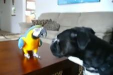 Hund und Papagei