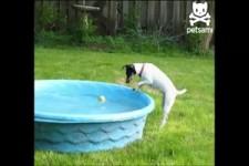 Wasserscheuer Hund