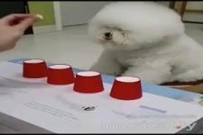 Huetchenspiel mit Hund