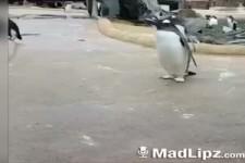 Spass mit Pinguinen