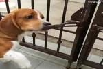 Pfiffige-Haustiere.mp4 auf www.funpot.net