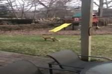 Spiel mit dem Fuchs