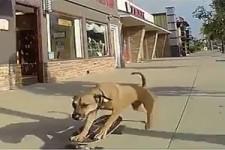 Skater-Dog