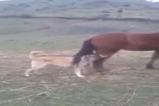 Pferd tritt aus...