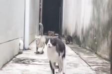 Katzen-Gang