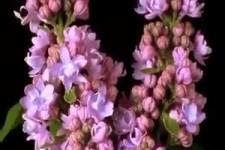 tolle Blüten
