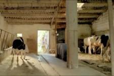 Den Stier gemolken...