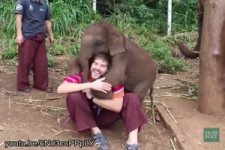 Große Liebe von Baby Elefanten
