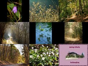 Bilder-Galerie vom 27012018 5 Wald 1