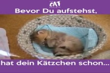 Dein Kätzchen