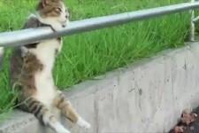 coole Katzen