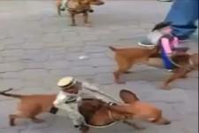 Western mit Hunden