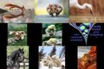 Bilder-Galerie.pps auf www.funpot.net