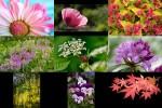Bilder-Galerie---Blumen.pps auf www.funpot.net