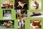 Süße-Katzen-.pps auf www.funpot.net