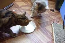 Die Milch gehört zu mir!!!!