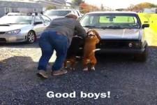 Super Hunde