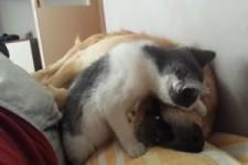 Katze neckt Hund