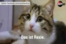 Das ist Rexie