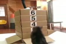 Katzen und Kartons