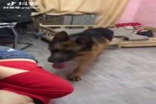 Guter Hund, er weis daß seine Besitzerin...
