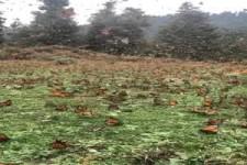Monarchfalter-Schongebiet