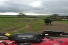 Der Stier sieht rot