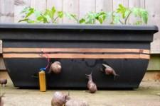 Elektrischer Zaun für Schnecken
