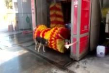 Kluger Hund