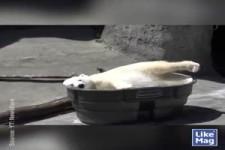 Glücklicher Eisbär