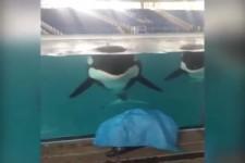 Einen Wal kann man nicht austricksen