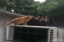 Es erstaunt mich immer, wie weit manche Katzen springen