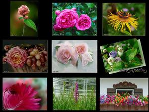Frutas y Flores - Früchte und Blüten