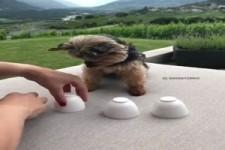 Sehr kluger Hund