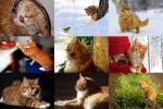 Red-Cats-1---Rote-Katzen-1.ppsx auf www.funpot.net