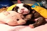 Goldige-Hunde.mp4 auf www.funpot.net