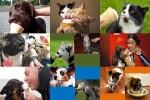 Dogs,-Cats-&-Ice-Cream---Hunde,-Katzen-&-Eis.ppsx auf www.funpot.net
