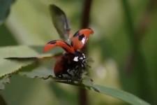 Schöne Käfer