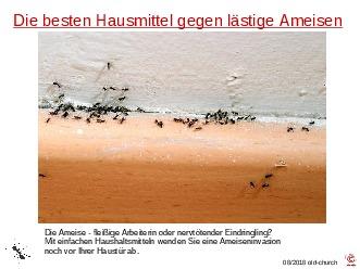 Ameisen und deren Bekämpfung