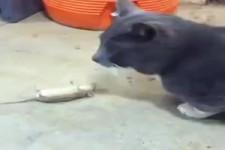 Lustiges Katz- und Maus-Spiel