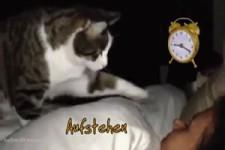 Süße Katzenwecker